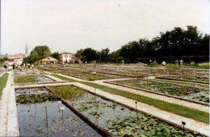1996 Latour Marliac ponds