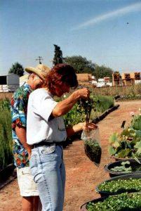 2002 Oregon_Verena Lichti pulling plants at Jim's