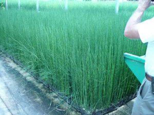 2008 Virginia_grasses