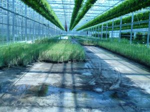2008 Virginia_greenhouse flood area