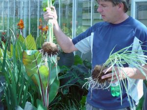 2008 Virginia_society garlic