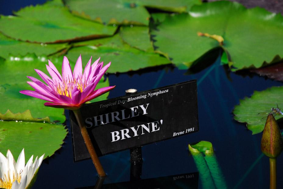 2010 San Angelo_Shirley Bryne