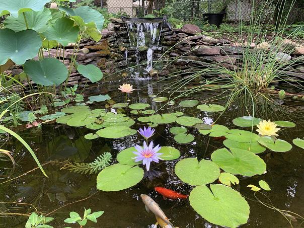 Board - suzanne pond