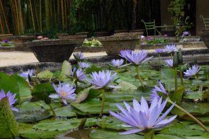LATOUR tropical purple lilies