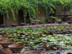 Latour lily pond mixed colours