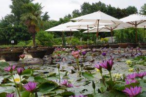 Latour mixed colour lilies