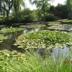 Givernay Monet pond
