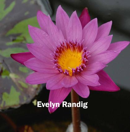 HOF Martin Randig Evelyn