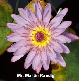 HOF Martin Randig lily