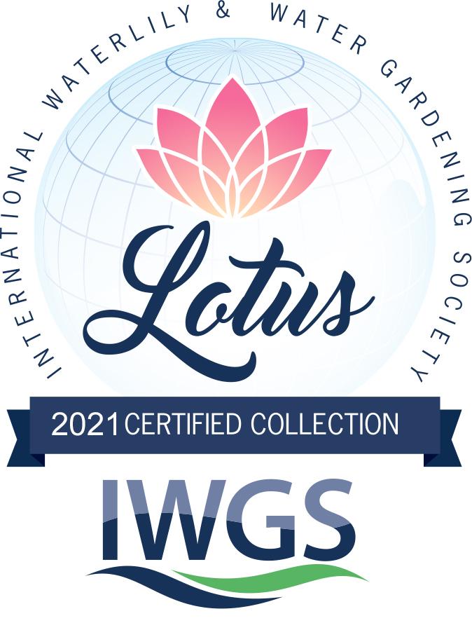 IWGS_LotusWaterlily____Lotus