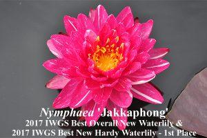 Nymphaea Jakkaphong' Best Overall 2017