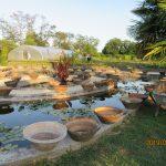 Latour-Marliac pond