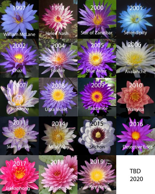 New Waterlily Winners 1997-2020