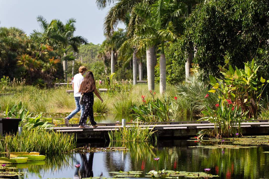 Naples Botanical Garden Water Garden