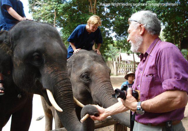 Malcom Wright feeding sugar cane to hungry performers