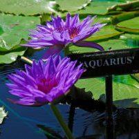 2010 San Angelo_Aquarius (1)