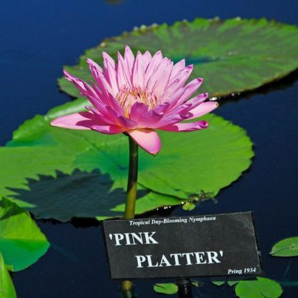 2010 San Angelo_Pink Platter